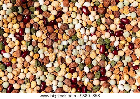 Nine types of protein rich grains on a plain background