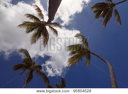 Palms below a blue sky with clouds