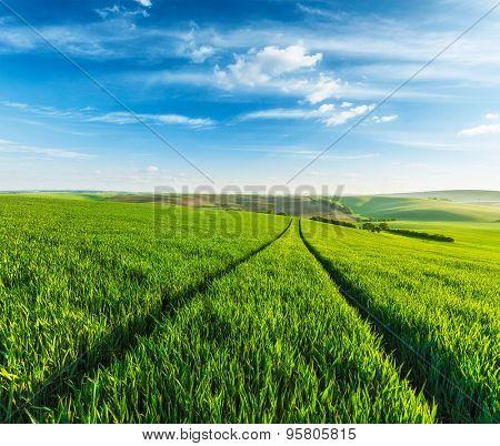 Green fields of Moravia, Czech Republic