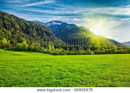 Alpine meadow in Bavarian Alps. Bavaria, Germany
