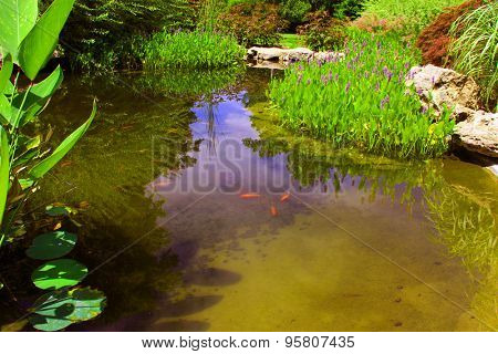 Pickerelweed and other water plants surround a small pond