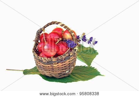 Small Basket With Red Cherries