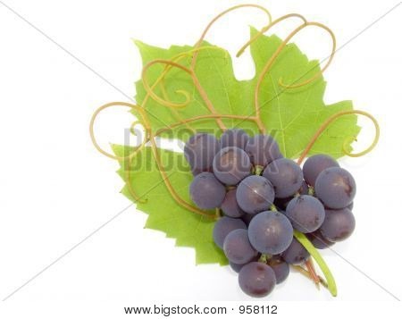 Cluster Of A Grapes
