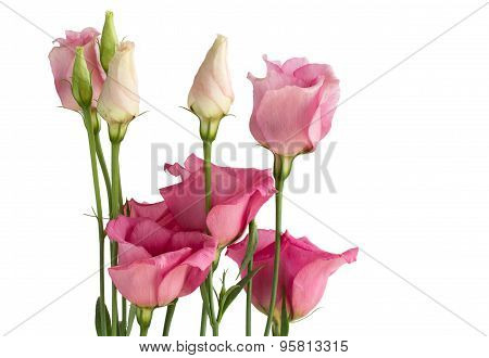 Beautiful bunch of pink lisianthus flowers