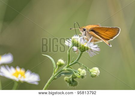 Colorful butterfly on a small flower