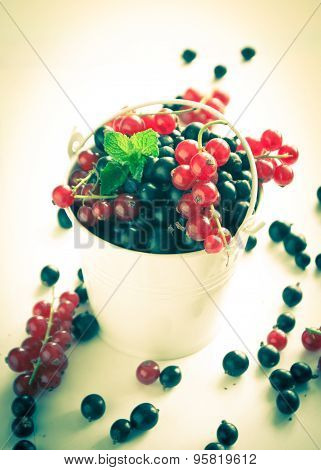 Black Currant And Red Currants