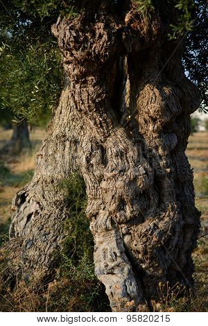 Olive Trunk