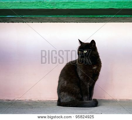 Black Cat Sitting Under The Bench