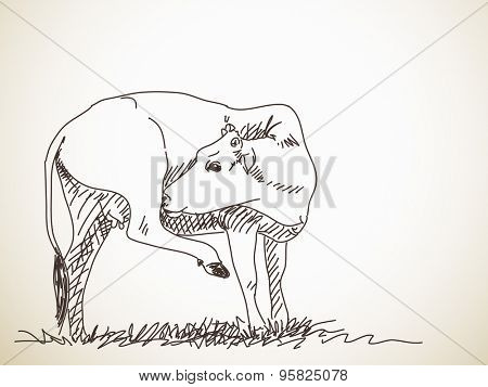 Sketch of cow itching her leg, Hand drawn vector illustration