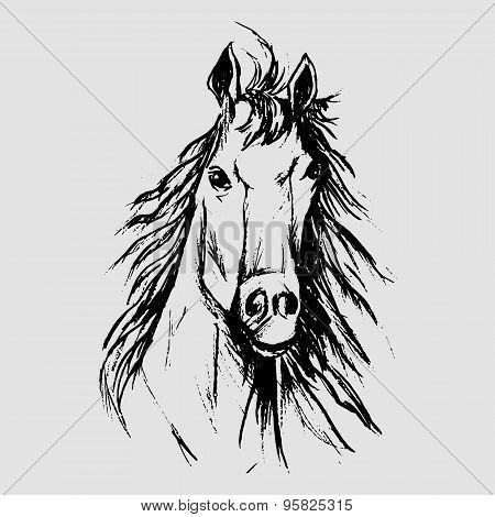 Horse Scetch