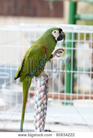 Green Parrot Perched On A Cage