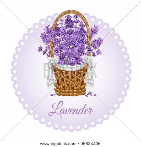 Vintage card with fragrant lavender in thatch wicker basket.  Vector illustration.