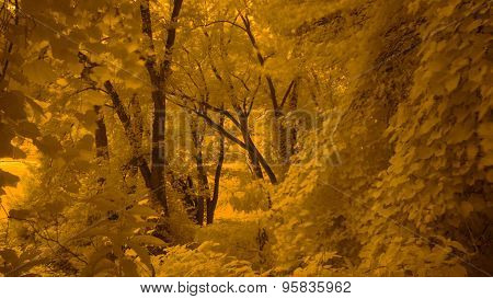 Yellow Infrared Photo along a River. Wild Grape Vine Leaves.