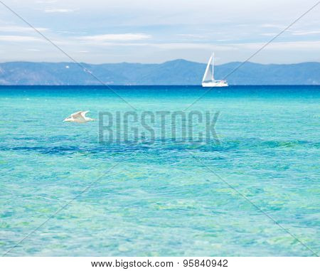 Peaceful seascape with blue-green transparent water, seagull and a yacht in the background.