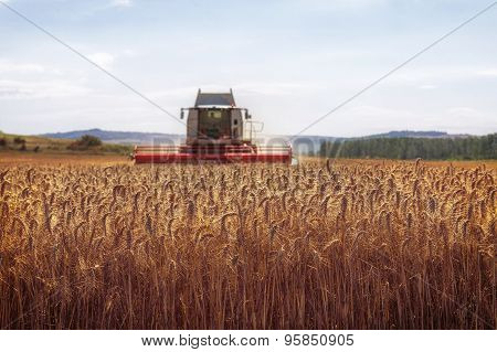 Combine Harvester Collecting Cereal