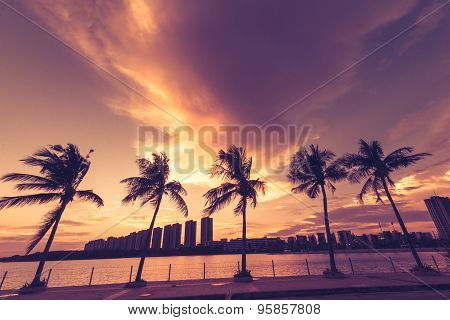 Abstract Background Of The Silhouette Of A Coconut Tree