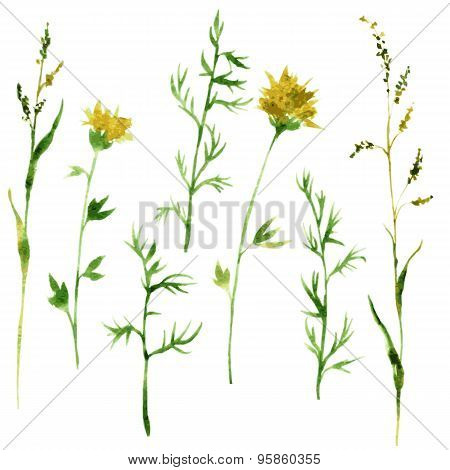 Set of watercolor drawing herbs