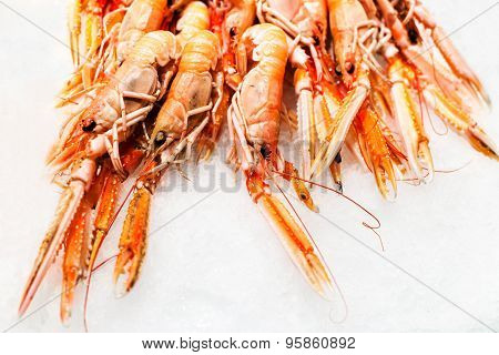 Shrimp Cocktail Background Over White Ice On A Market Stall Close Up. Group Of  Tiger Shrim