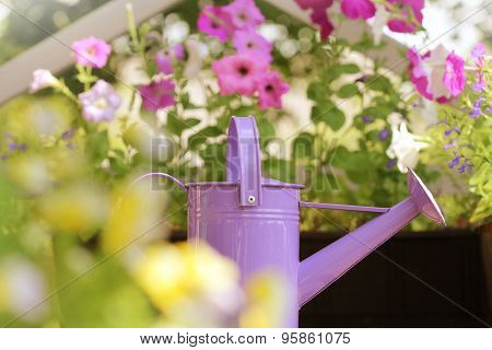 watering flowers in balcony