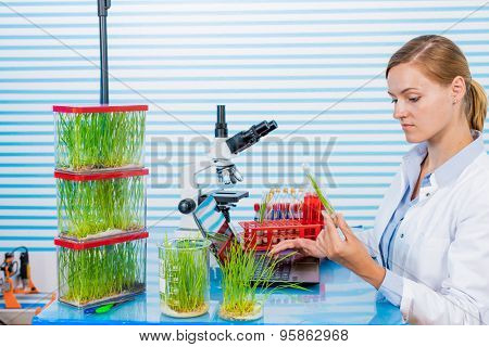 Technician in laboratory Research green plants