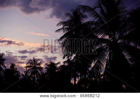 Silhouette of palm trees in the sunset