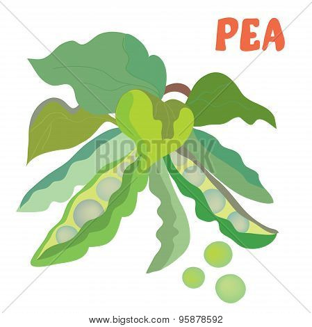 Green Pea Illustration With Beans