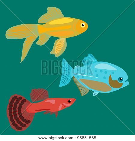 Aquarium fish. Goldfish, Piranha, Guppy