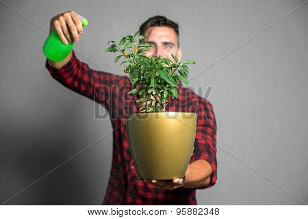Young man sprays flowers, isolated on gray