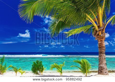 Single palm tree on the beach overlooking amazing green lagoon