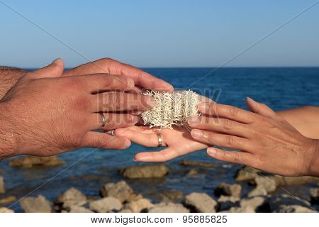 Male And Female Hands Holding Sea Sponge