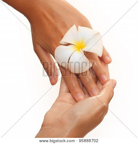 Close-up Of Female Hands In Oil Holding Flower On White Background