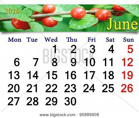 Calendar For June 2016 With Red Berries Of Prunus Tomentosa