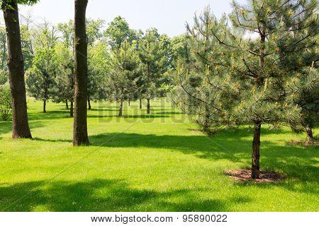 Furs garden