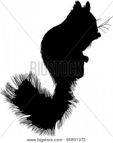 illustration with squirrel isolated on white background