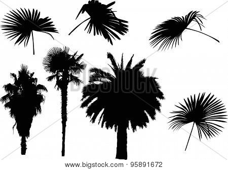 illustration with palm trees isolated on white background