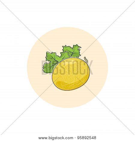 Icon Colorful Melon