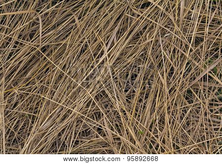 Beveled Yellow Dry Grass. Background And Texture