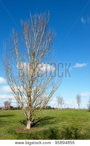 Spring Tree And Blue Sky