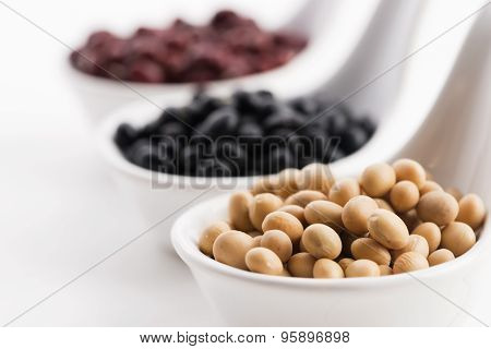 Tricolor Soybeans