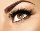 Постер, плакат: Brown Eye Makeup Eyes Make up Beautiful Eyes Make up detail perfect beauty eyebrows
