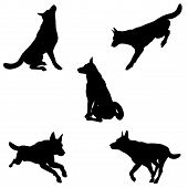 stock photo of alsatian  - Black silhouettes of an Alsatian  - JPG