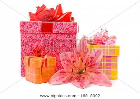 Pink lily and gift boxes on a white background