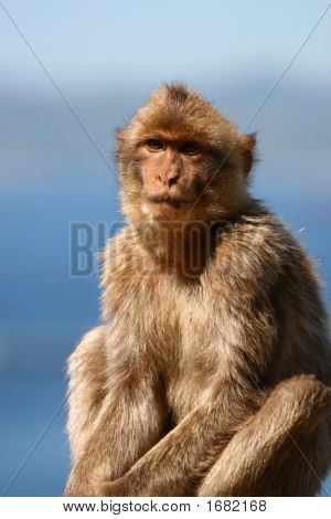 Macaque With Sky And Ocean Backdrop