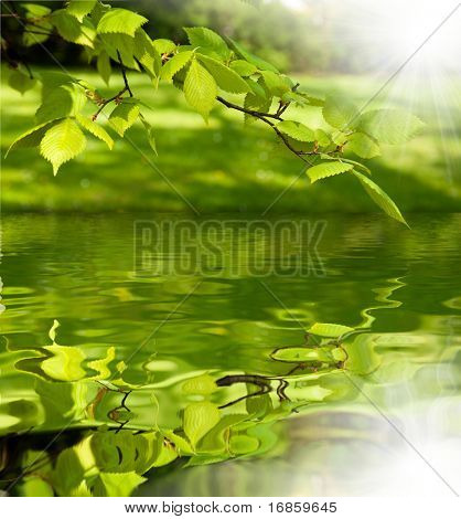 branch of tree reflection on lake surface
