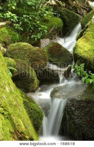 Mossy Water Fall