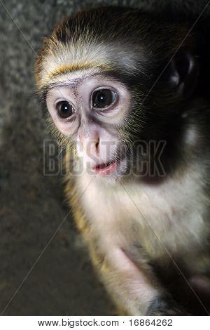 Monkeys young one
