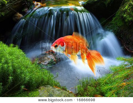 Jumping goldfish in tropical paradise