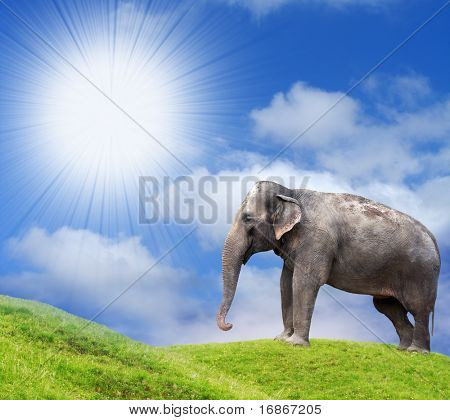 Sunny African Pasture with Elephant