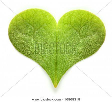 Green hearth - environmental metaphor