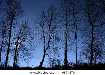 Tree silhouette - monochrome photography